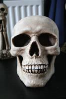 Skull 1 by TwiggXstock