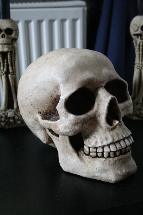 Skull 2 by TwiggXstock