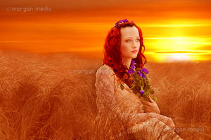 Sunset in a field by MorganMediaCo