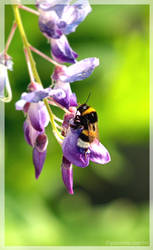 D'Annunzio's Bee