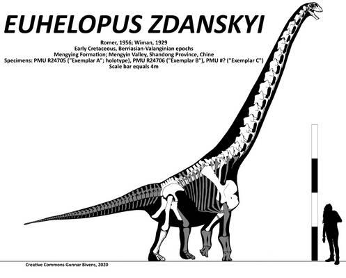 Euhelopus zdanskyi Skeletal