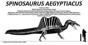 Spinosaurus aegyptiacus Skeletal