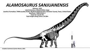 Alamosaurus sanjuanensis Skeletal II