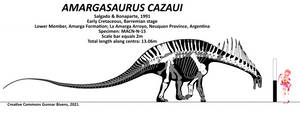 Amargasaurus cazaui Skeletal