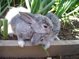 bunnies by yoshmir92