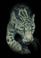 Clouded Leopard by silvercrossfox