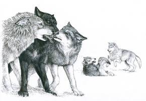 Wolf Behavior by silvercrossfox