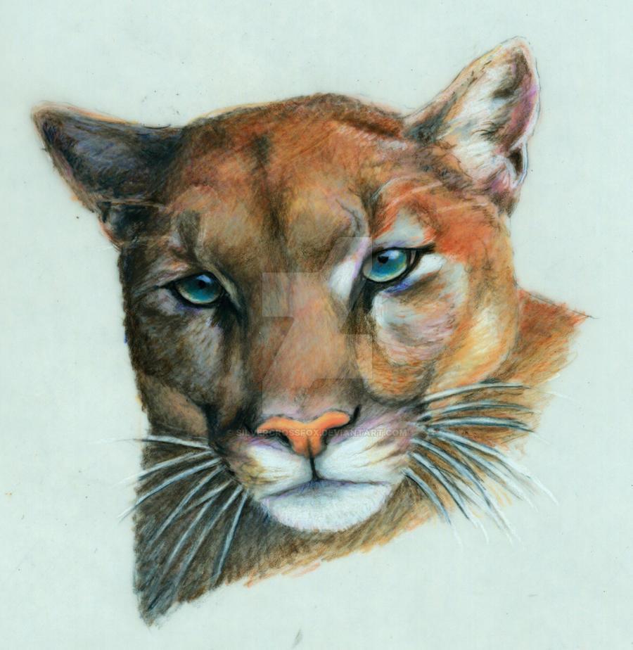 Cougar by silvercrossfox