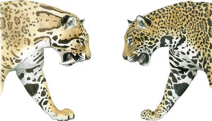Sabre-toothed Cat and Jaguar by silvercrossfox