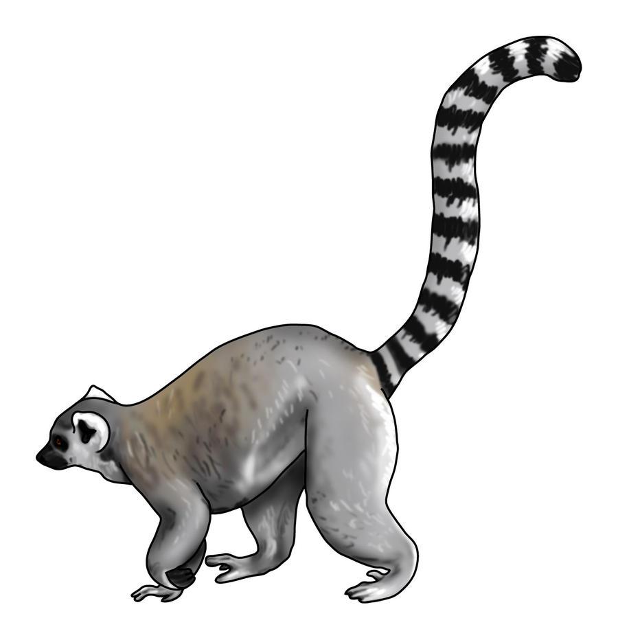 lemur drawing lemur clip art black and white lemer clip art