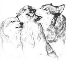 Wolf Interaction 2 by silvercrossfox