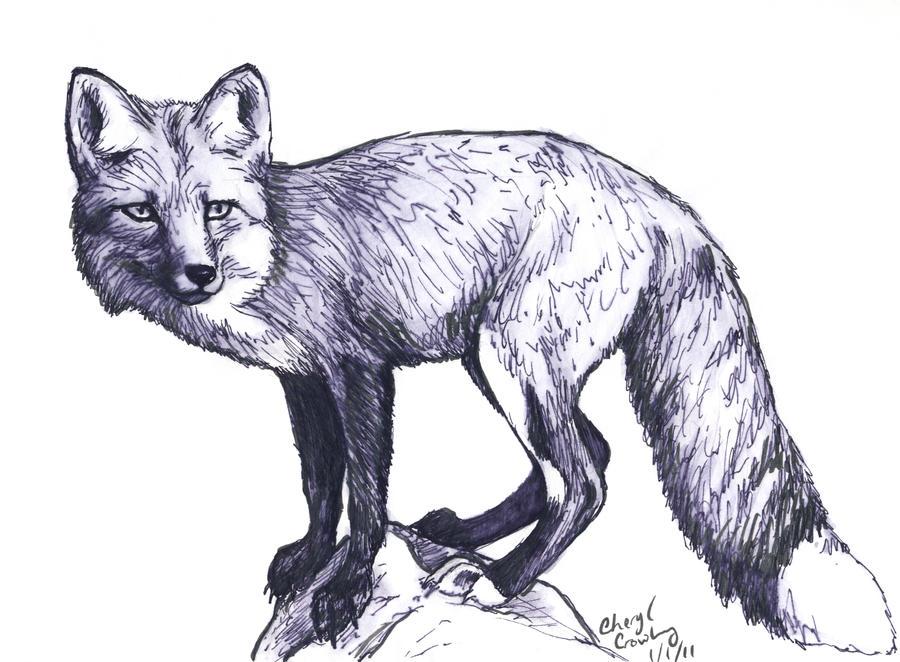Fox Sketch by silvercrossfox on DeviantArt: silvercrossfox.deviantart.com/art/Fox-Sketch-191803909