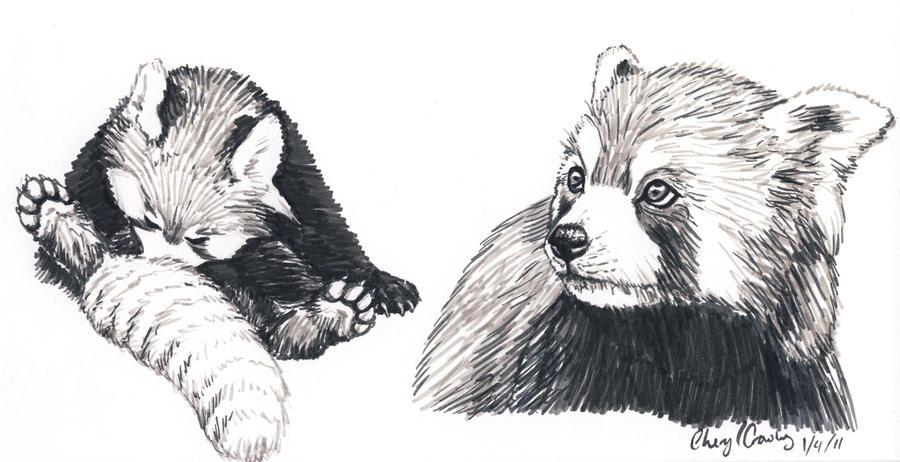 Red Panda Sketch by silvercrossfox on DeviantArt