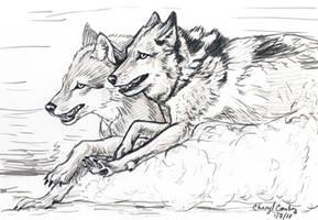 Wolves running sketch by silvercrossfox