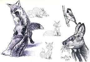 Fox, Musk Deer and bird skech by silvercrossfox