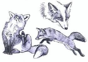 Fox and platinum fox sketches by silvercrossfox