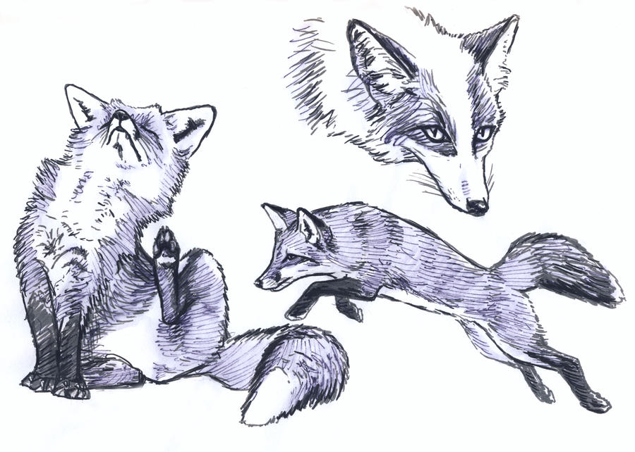 Fox and platinum fox sketches by silvercrossfox on deviantart for Cool fox drawings
