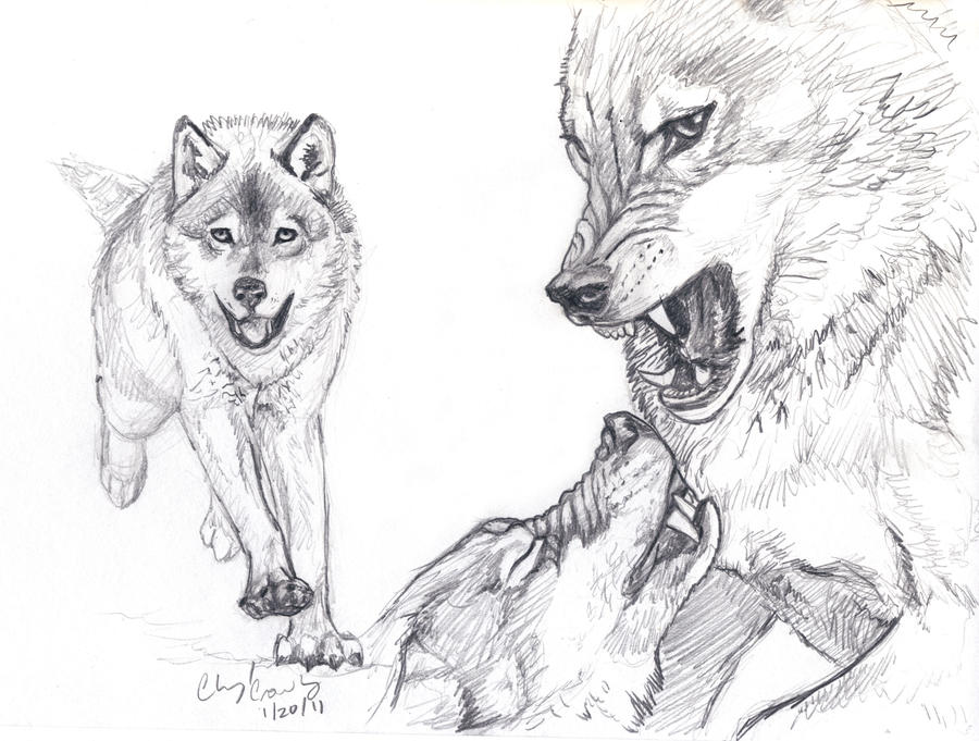 Go Back  gt  Gallery For  gt  Drawings Of Wolves In Love In PencilFighting Wolf Drawings