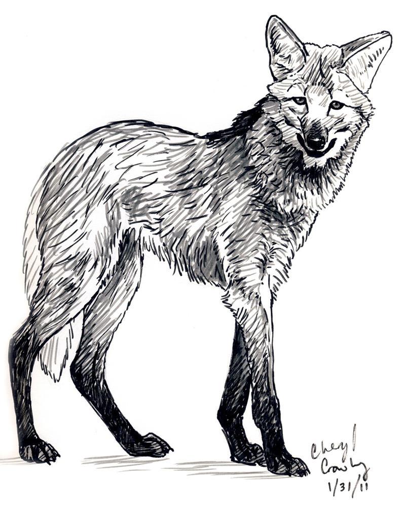 Maned Wolf by silvercrossfox on DeviantArt