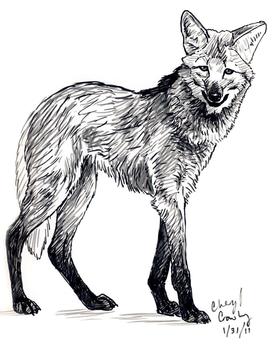 Maned Wolf By Silvercrossfox On DeviantArt