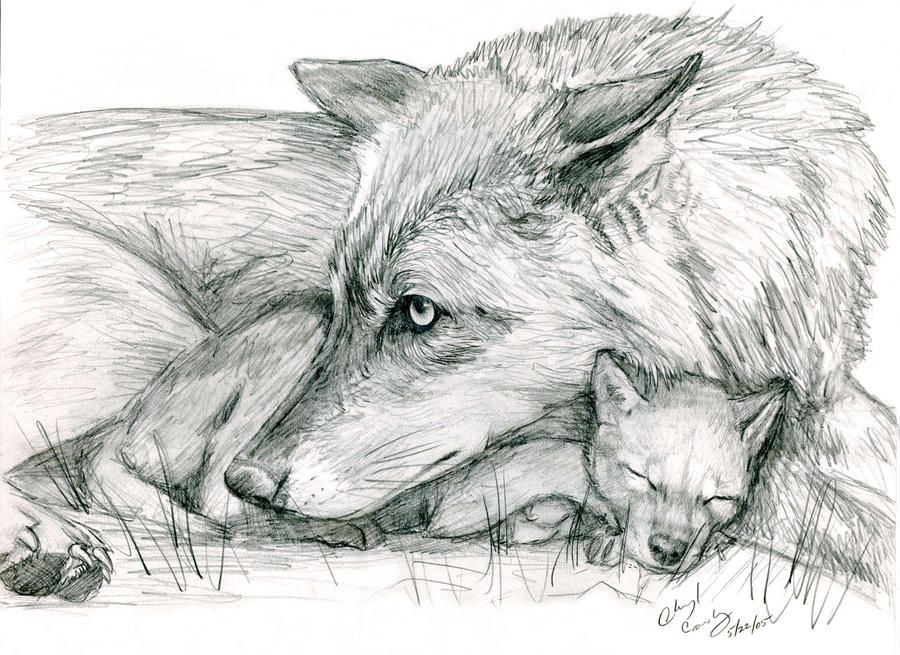 how to draw a baby wolf pup