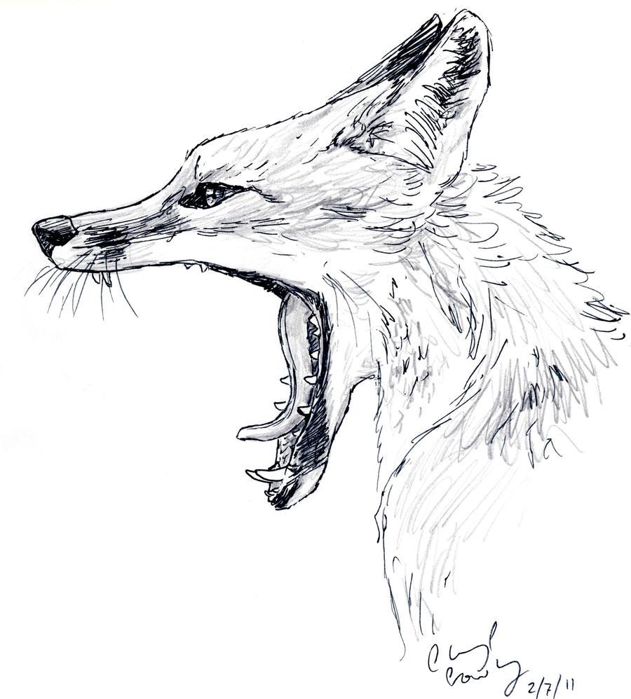 how to draw so cut bat-eared fox