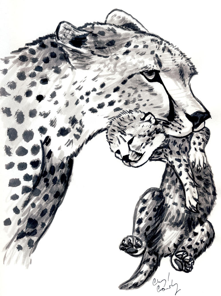 Cheetah carrying Cub by silvercrossfox
