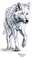 White Wolf by silvercrossfox