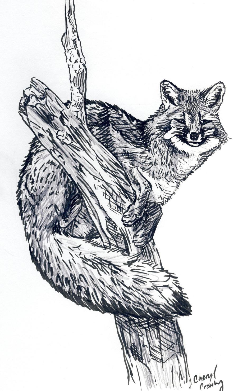 gray fox in tree by silvercrossfox on deviantart