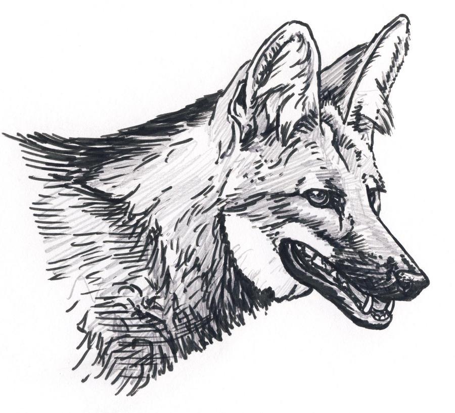 Maned Wolf Portrait By Silvercrossfox On DeviantArt