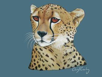 Cheetah by silvercrossfox
