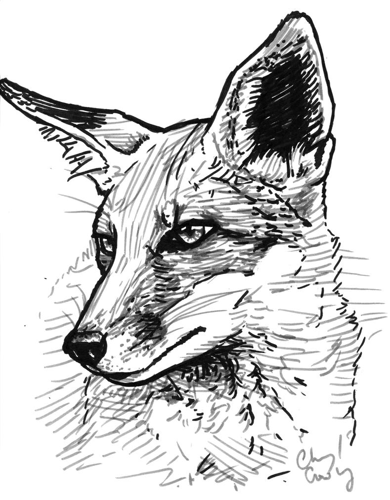 Line Drawing Fox : A quick fox sketch by silvercrossfox on deviantart