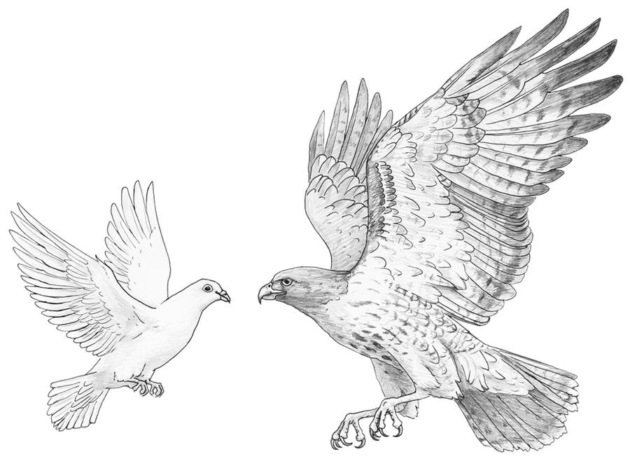 This is a photo of Adorable Realistic Dove Drawing