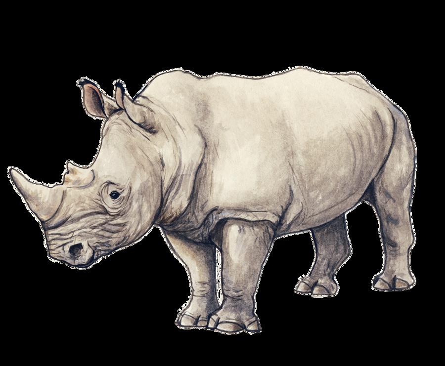 Rhino By Silvercrossfox On Deviantart