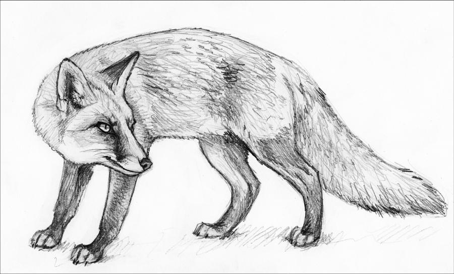 how to draw a black fox