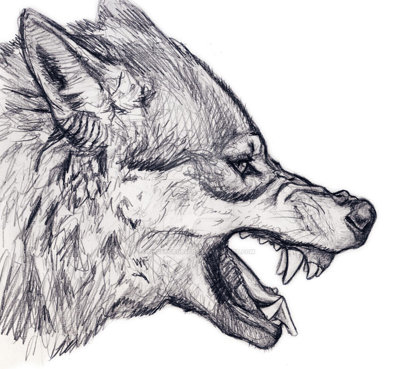 21 Wolf Drawings Pencil Drawings Sketches  FreeCreatives