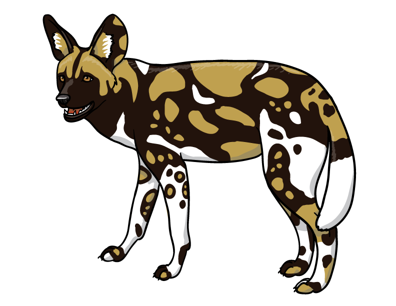 This is a photo of Astounding African Wild Dog Drawing