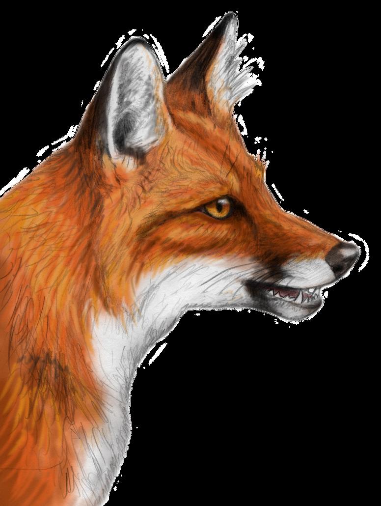 Red fox by silvercrossfox on deviantart for Cool fox drawings