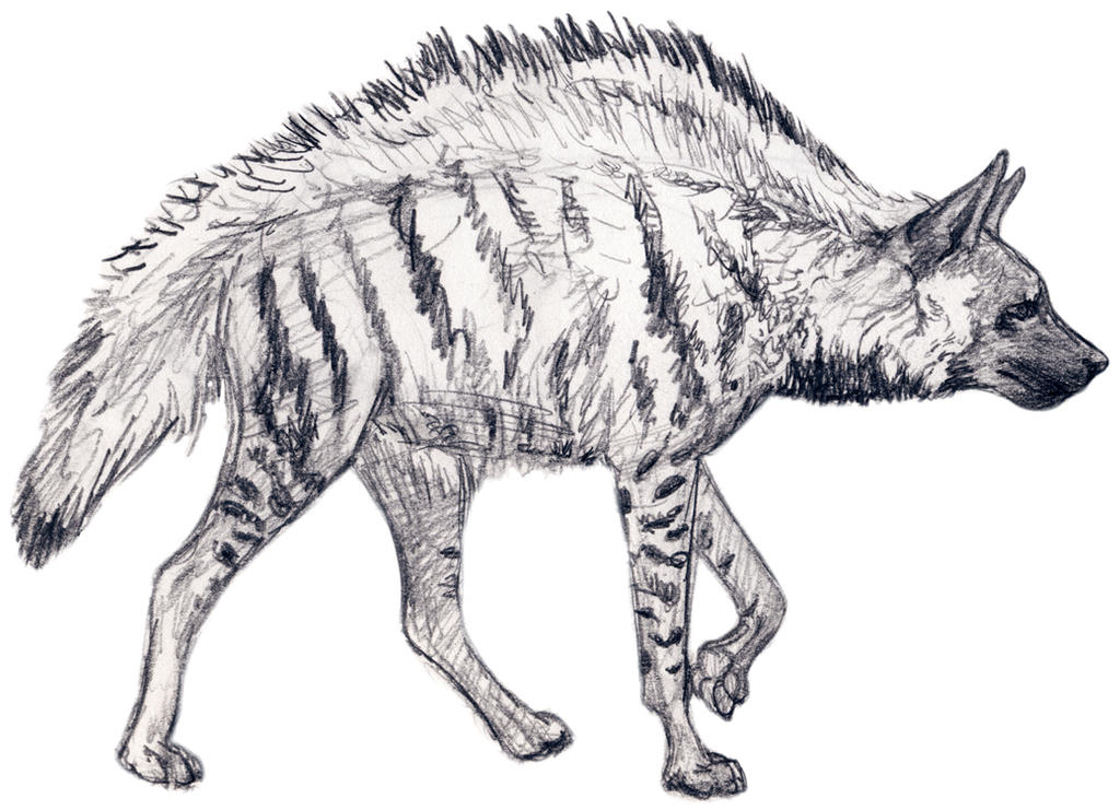 Stripped Hyena Sketch by silvercrossfox