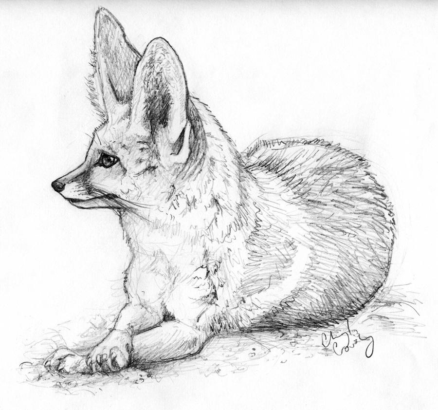 Fennec Fox Sketch by silvercrossfox