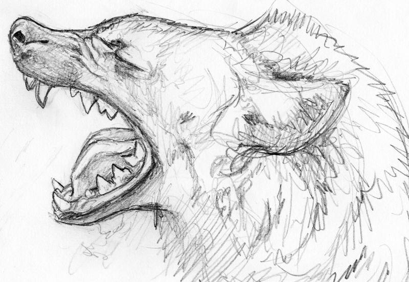 Spotted Hyena Yawn Sketch by silvercrossfox