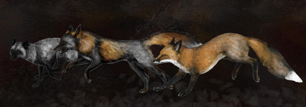 Silver Cross Fox Running by silvercrossfox