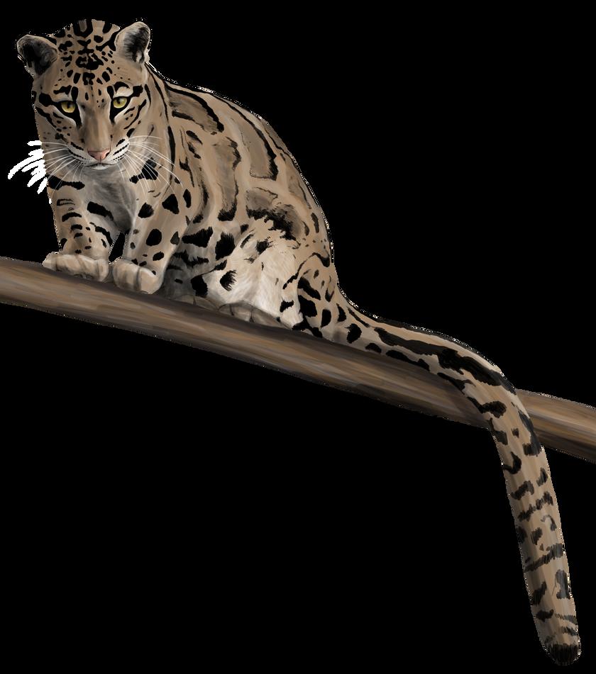 Clouded Leopard Stare by silvercrossfox