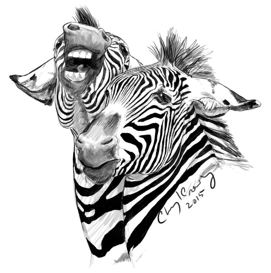 Grevy's Zebras Playing by silvercrossfox