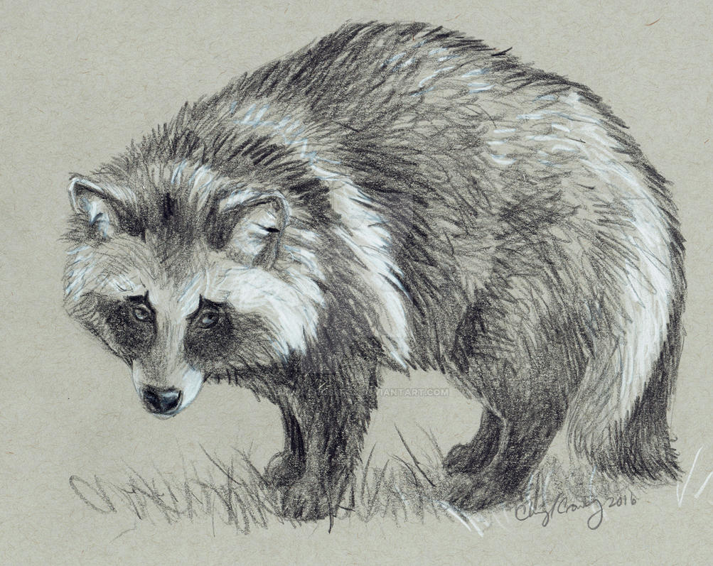 Tanuki Sketch by silvercrossfox