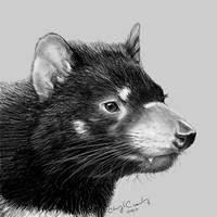 Tasmanian Devil (Day 19) by silvercrossfox
