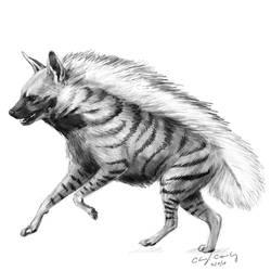 Striped Hyena (Day 40) by silvercrossfox