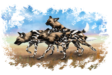 African Painted Dog Pack by silvercrossfox