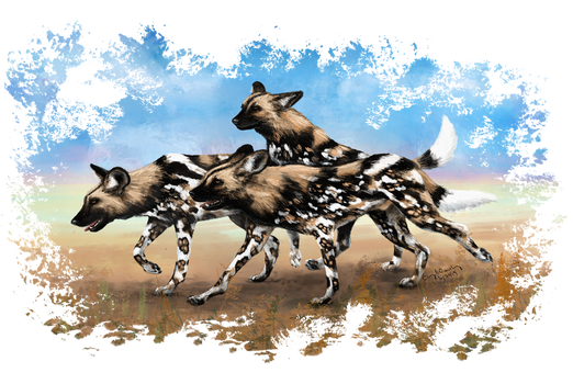 African Painted Dog Pack
