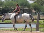 tackless riding stock